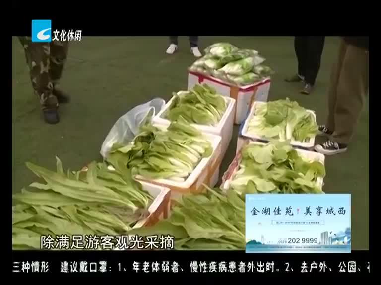 弘扬践行社会主义核心价值观:雾耕基地的有机蔬菜成熟了 摘些蔬菜做公益送老人