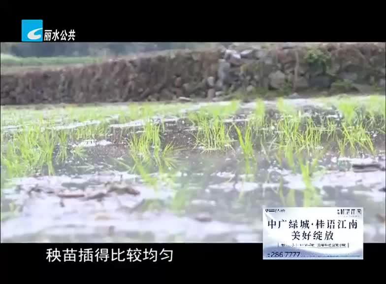 青田有了首台水稻插秧机
