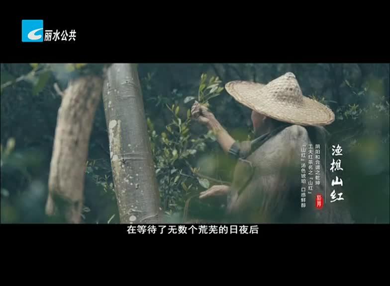 【松阳问茶】渔樵山红