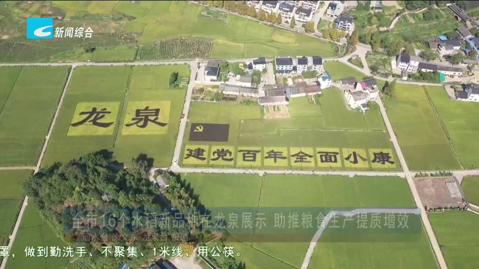 全市16个水稻新品种在龙泉展示 助推粮食生产提质增效