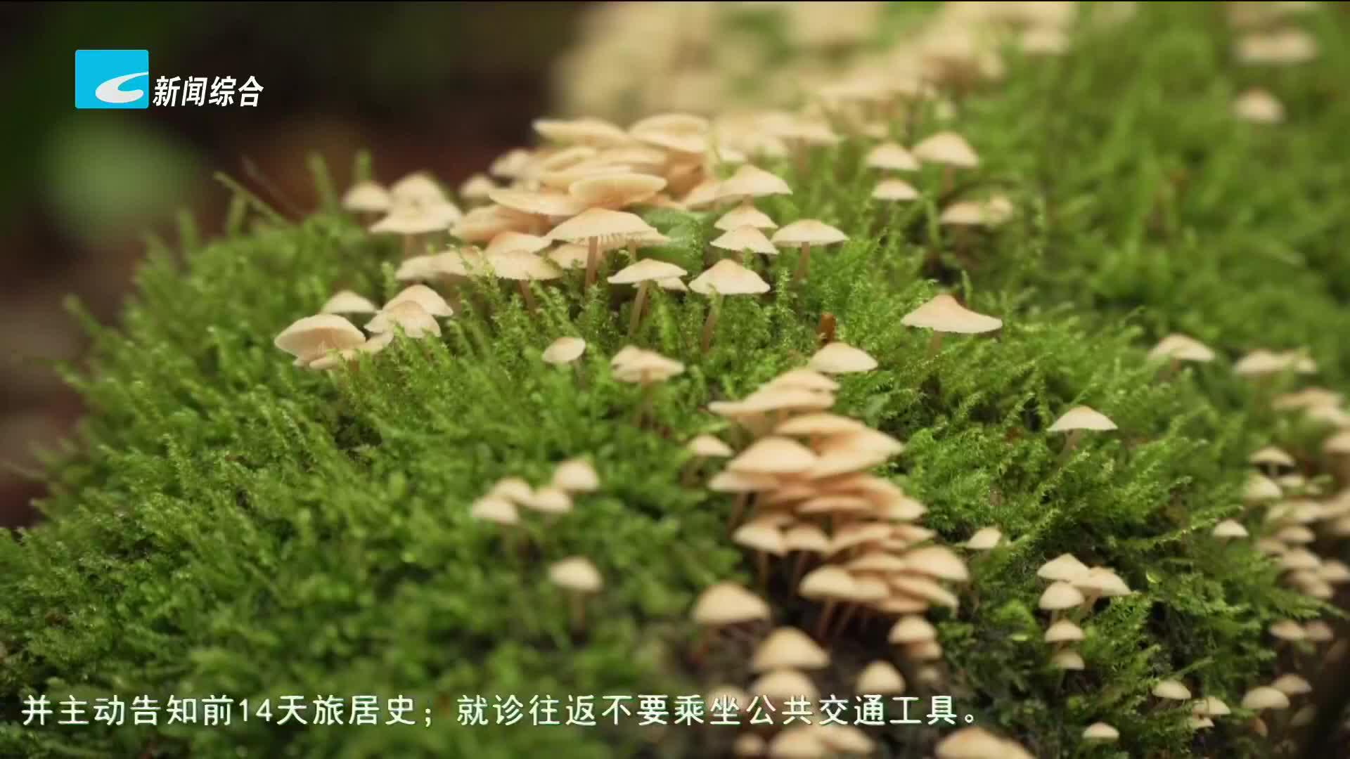 百山祖国家公园发现全球大型真菌新物种