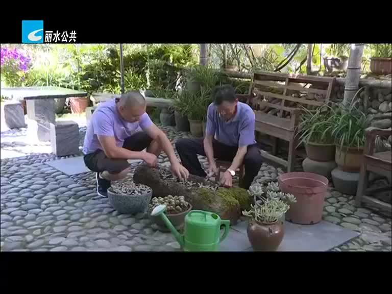 """共同富裕新征程:景宁伏叶村:打造美丽家园 带来源源不断""""好钱景"""""""